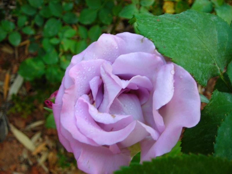 Nuestro jardín de Sa Possessió - Página 2 173_pl11