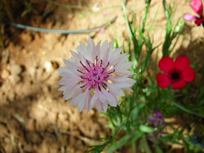 Nuestro jardín de Sa Possessió - Página 2 173_pl14