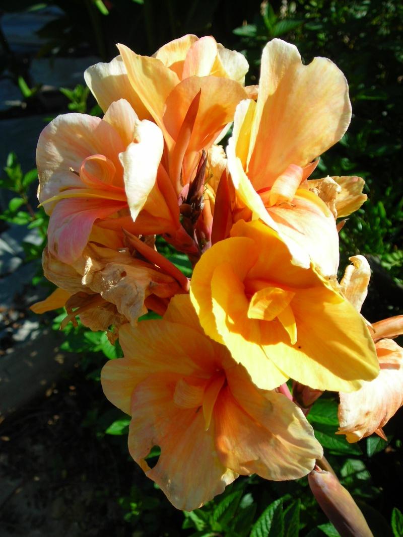 Nuestro jardín de Sa Possessió - Página 2 181_ne12