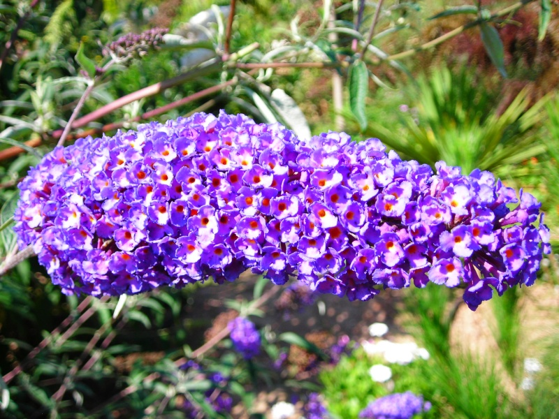 Nuestro jardín de Sa Possessió - Página 2 181_ne15