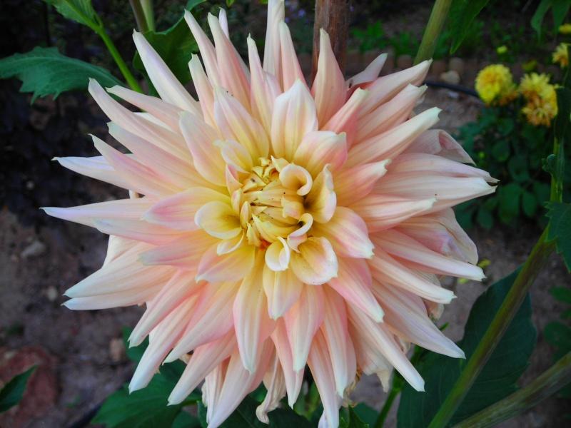Nuestro jardín de Sa Possessió - Página 2 186_fl10