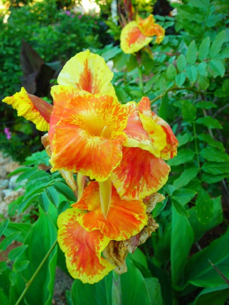 Nuestro jardín de Sa Possessió - Página 2 186_fl12