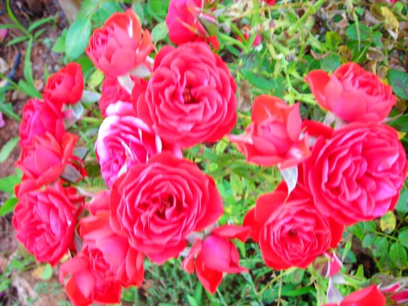 Nuestro jardín de Sa Possessió - Página 2 187_fl10