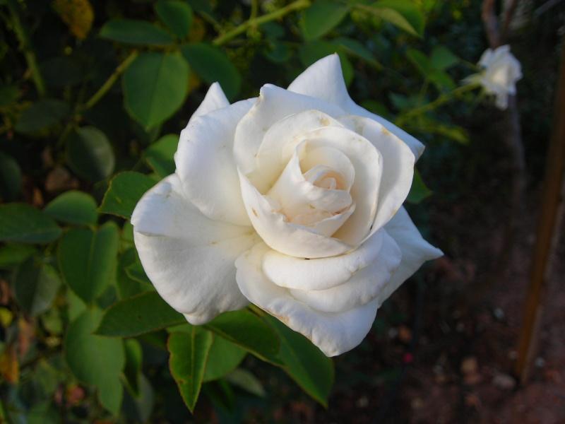 Nuestro jardín de Sa Possessió - Página 2 187_fl11