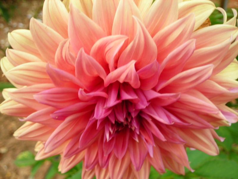 Nuestro jardín de Sa Possessió - Página 2 190_ja10