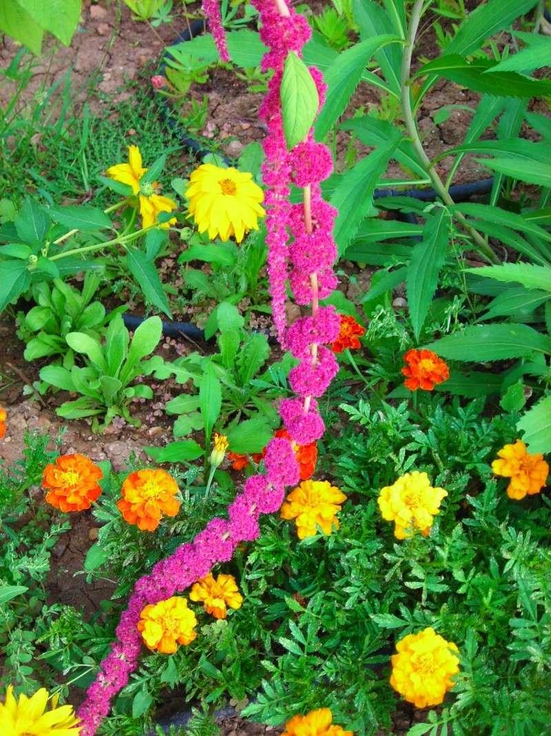 Nuestro jardín de Sa Possessió - Página 2 191_fl10