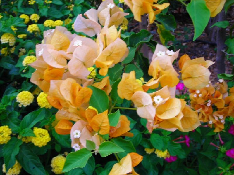 Nuestro jardín de Sa Possessió - Página 2 192_fl11