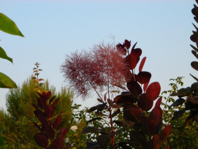 Nuestro jardín de Sa Possessió - Página 2 195_fl10