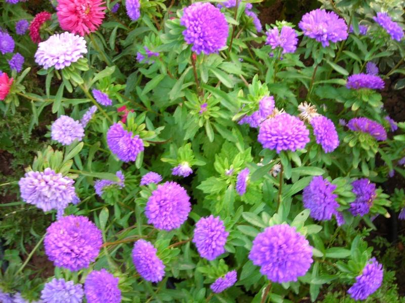 Nuestro jardín de Sa Possessió - Página 2 195_fl11