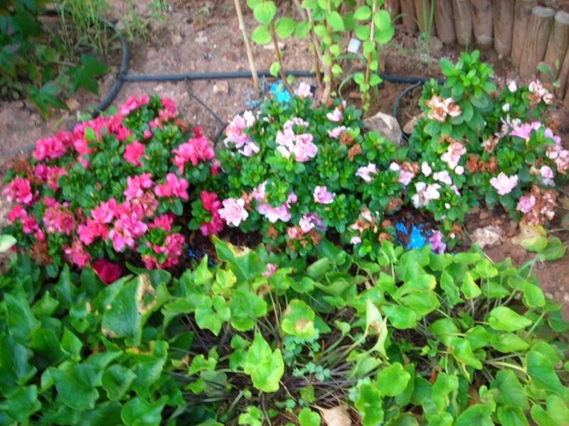 Nuestro jardín de Sa Possessió - Página 2 195_fl12