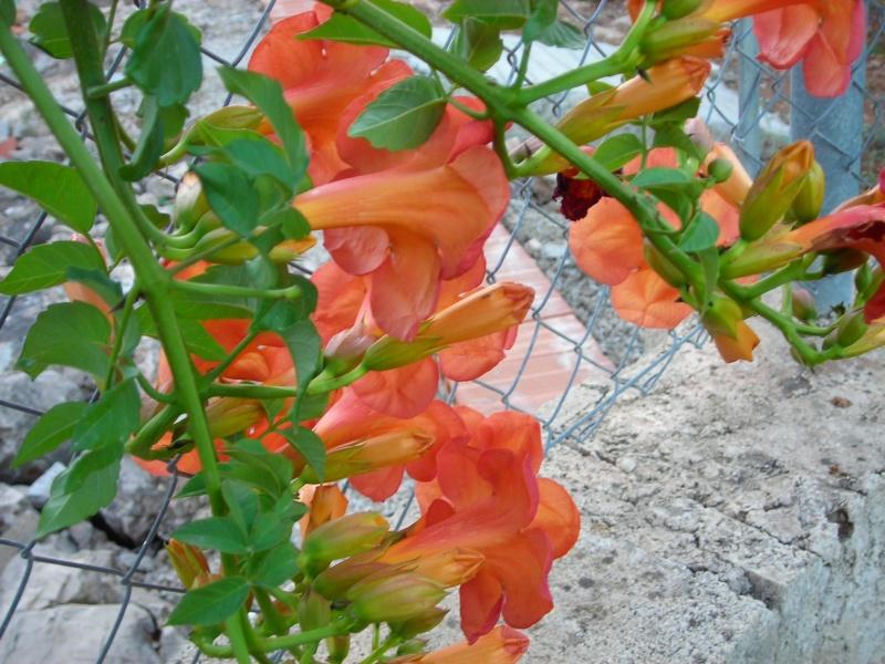 Nuestro jardín de Sa Possessió - Página 2 197_ag14