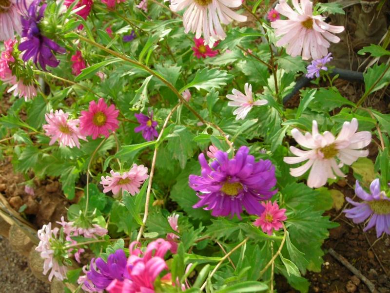 Nuestro jardín de Sa Possessió - Página 2 198_fl10