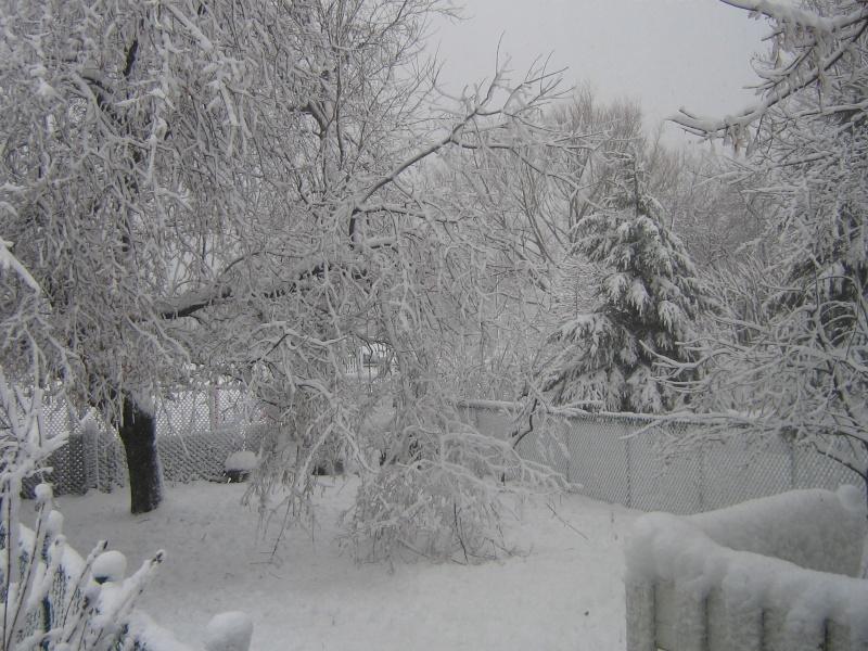 Tempête du 18 Décembre 2012 01910