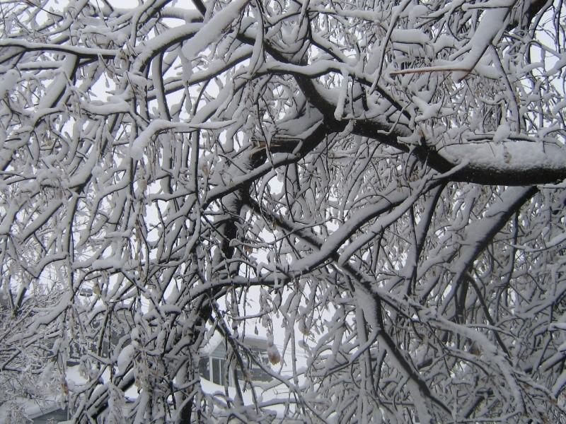 Tempête du 18 Décembre 2012 02010