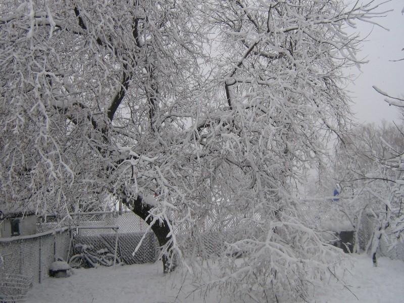 Tempête du 18 Décembre 2012 02111