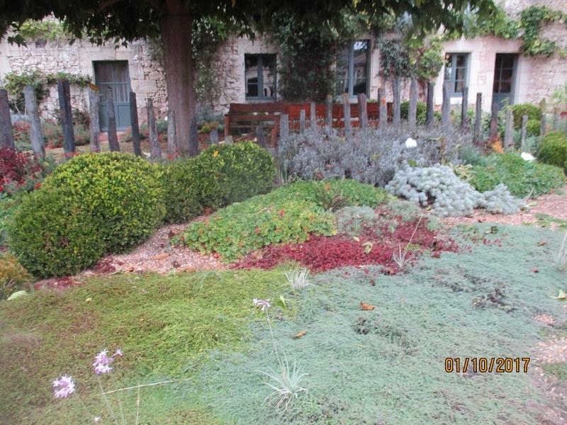 Plantes pouvant remplacer le gazon  Les_pl11