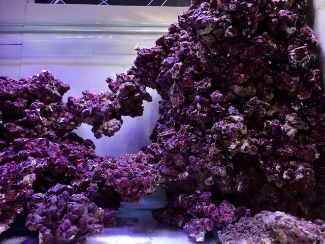 Reefscape Joris33 21389510