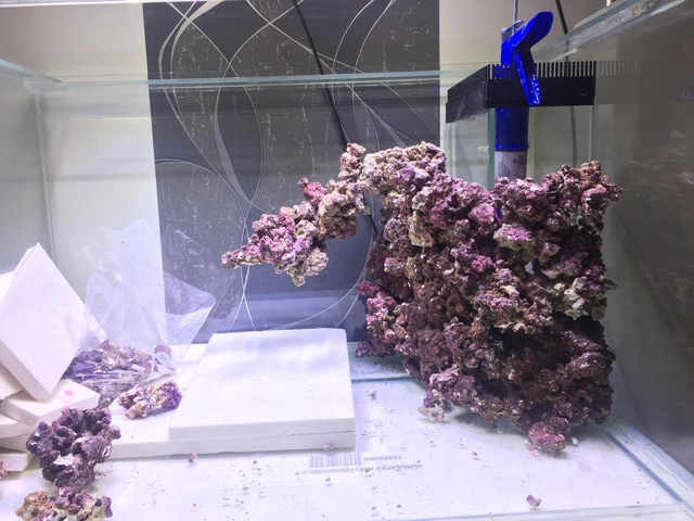 Reefscape Joris33 21439210