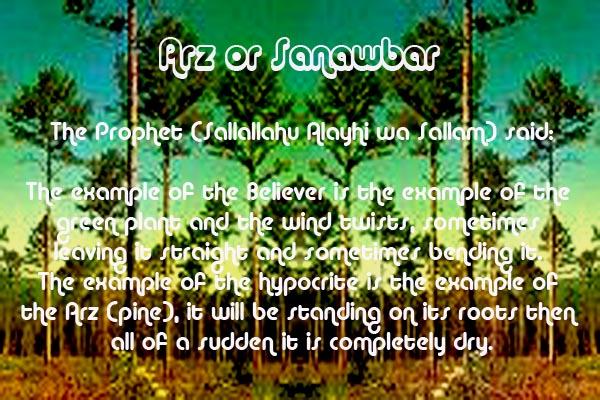 Healing with the Medicine of the Prophet (Sallallahu Alayhi wa Sallam) –Ibn Qayyim Arz10