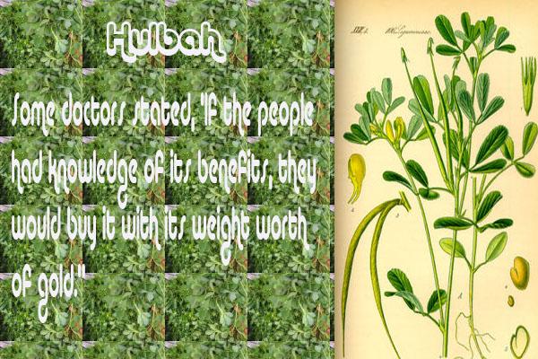 Healing with the Medicine of the Prophet (Sallallahu Alayhi wa Sallam) –Ibn Qayyim Hulbah10