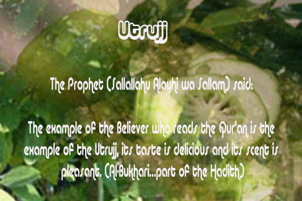 Healing with the Medicine of the Prophet (Sallallahu Alayhi wa Sallam) –Ibn Qayyim Utrujj10