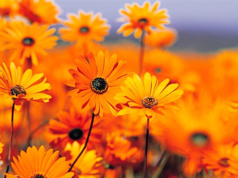 Photos - Nature qui nous enchante Bienve10