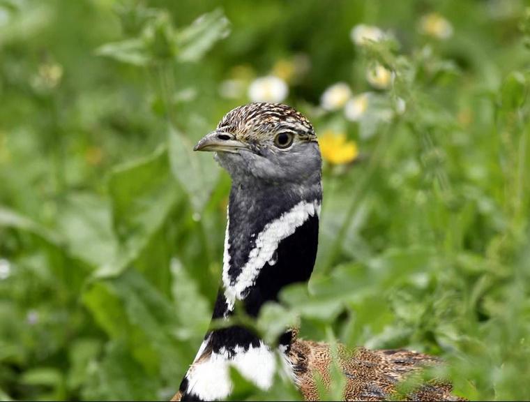 un oiseau à découvrir -ajonc- 6 janvier bravo Martine 6_janv10