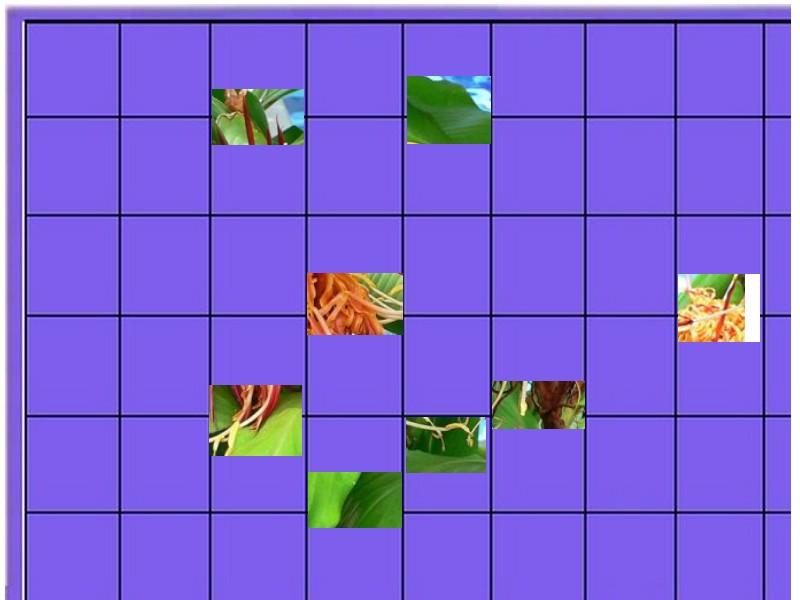 une  plante   - ajonc - 8 mai bravo Martine 8_mais11