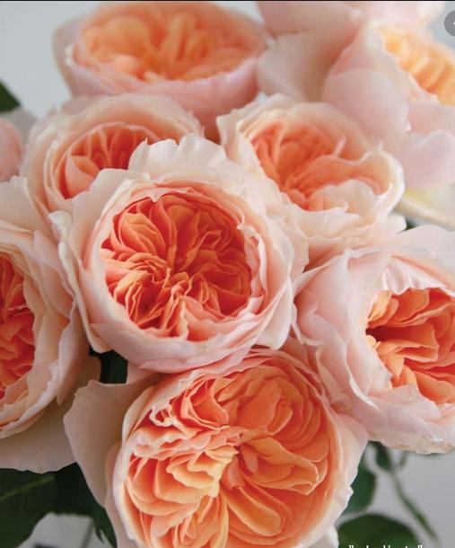 une  fleur  à trouver  - ajonc - 7 juin Bravo Martine Captu104