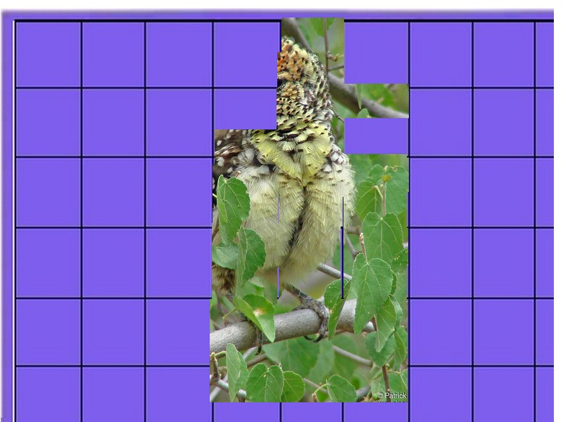 un oiseau - ajonc - 27 août - Page 2 Oiseau19