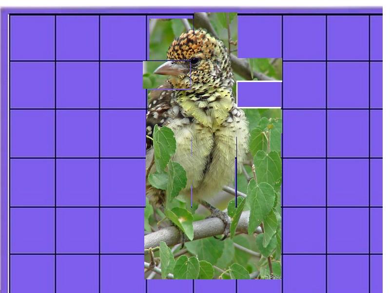 un oiseau - ajonc - 27 août - Page 2 Oiseau20