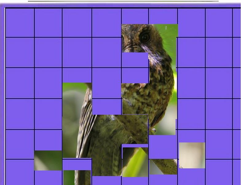 un oiseau - ajonc - 18 décembre Oiseau29