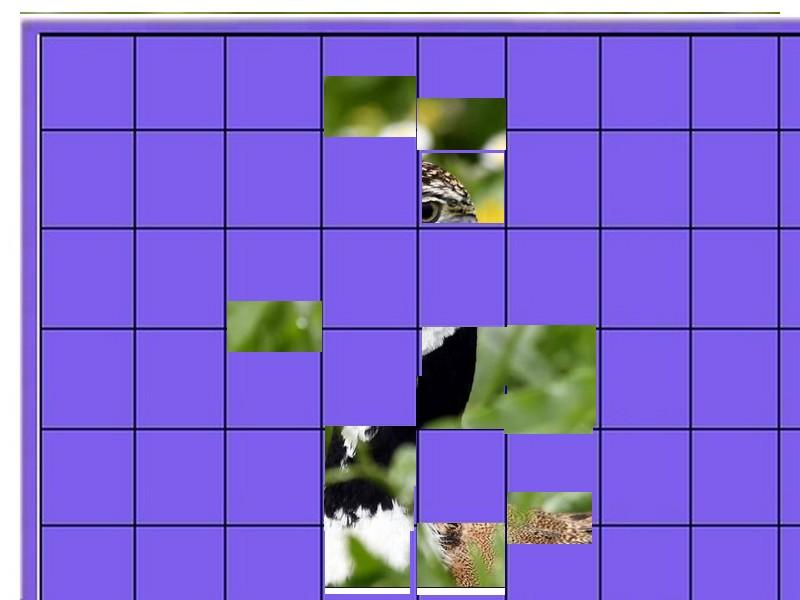 un oiseau à découvrir -ajonc- 6 janvier bravo Martine Un_ois17