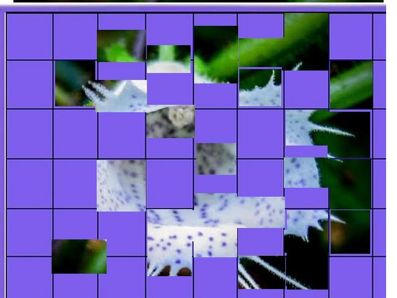 une plante - ajonc - 27 mai bravo Martine  - Page 2 Une_pl15