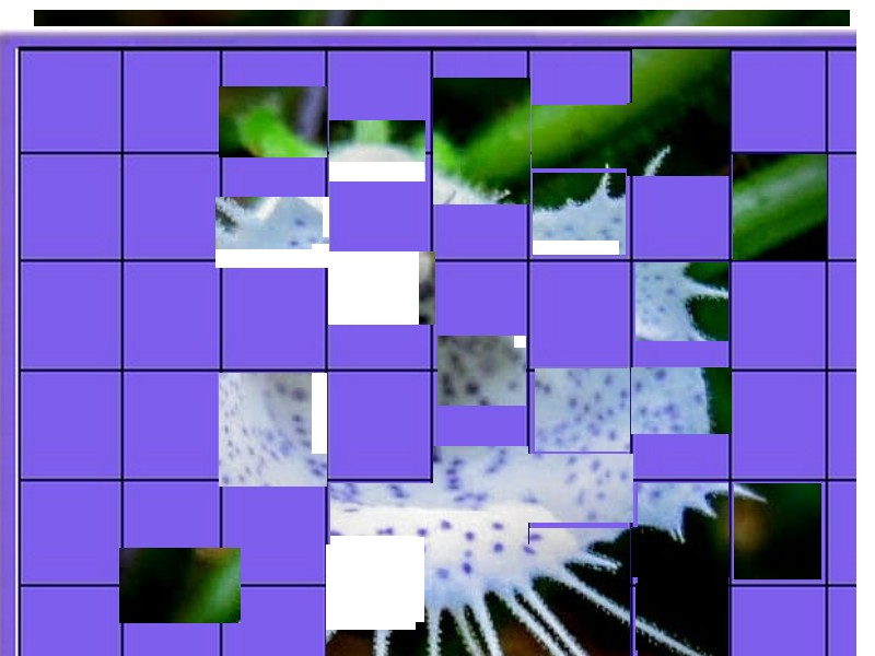 une plante - ajonc - 27 mai bravo Martine  - Page 2 Une_pl16