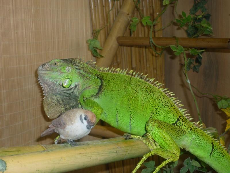 quelques un de mes reptiles P1000410