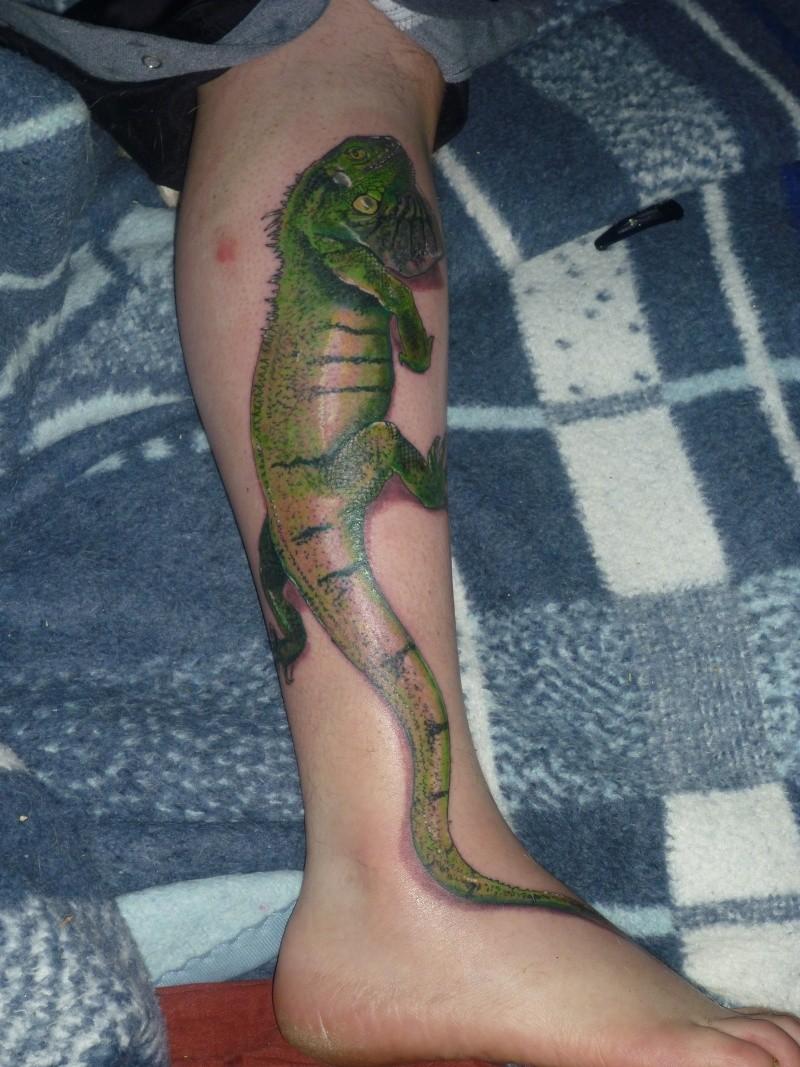 quelques un de mes reptiles P1000511