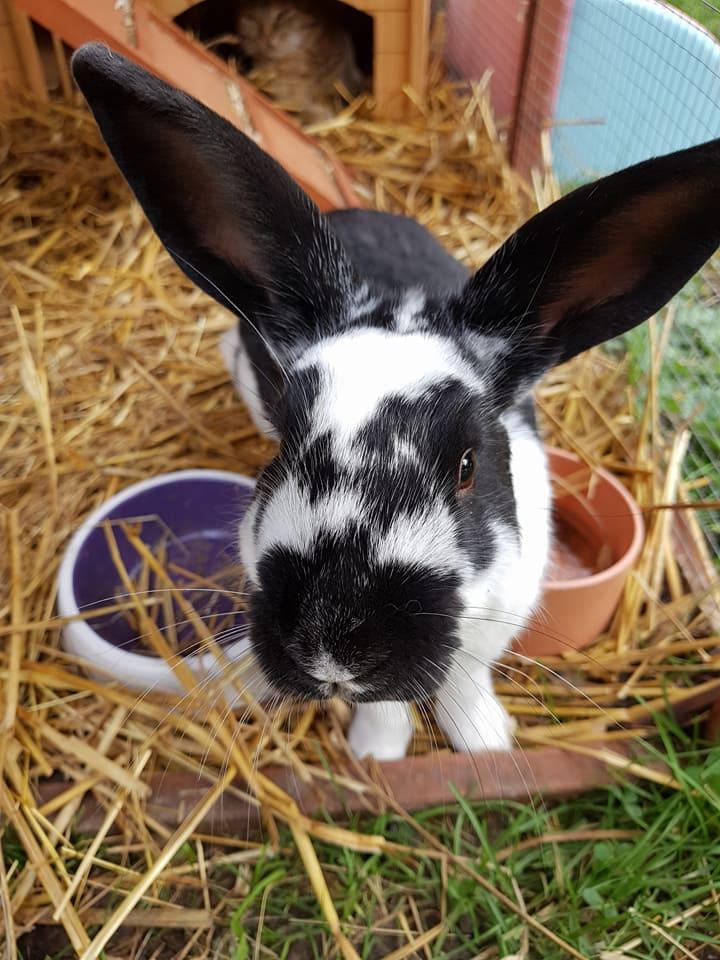 les lapins  22045710