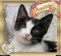 JOYEUX  ANNIVERSAIRE  CAT Pihqwc10