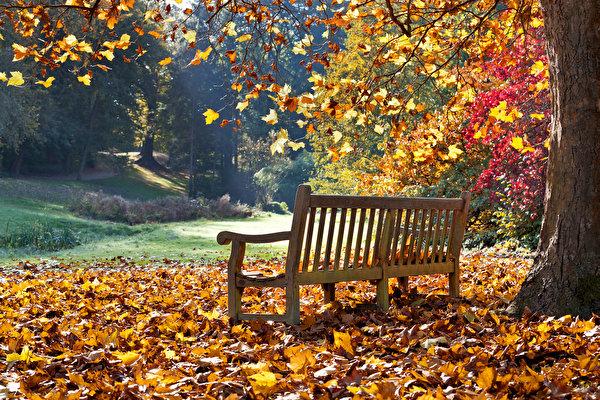 l'automne - Page 2 Autumn10
