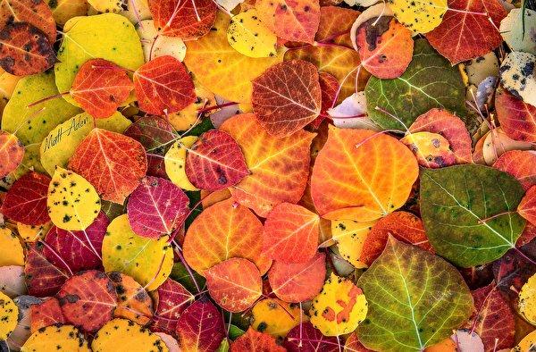 l'automne - Page 2 Textur10