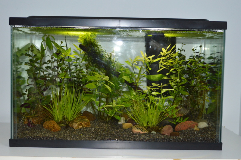 Mes 2 aquariums 10_gal11