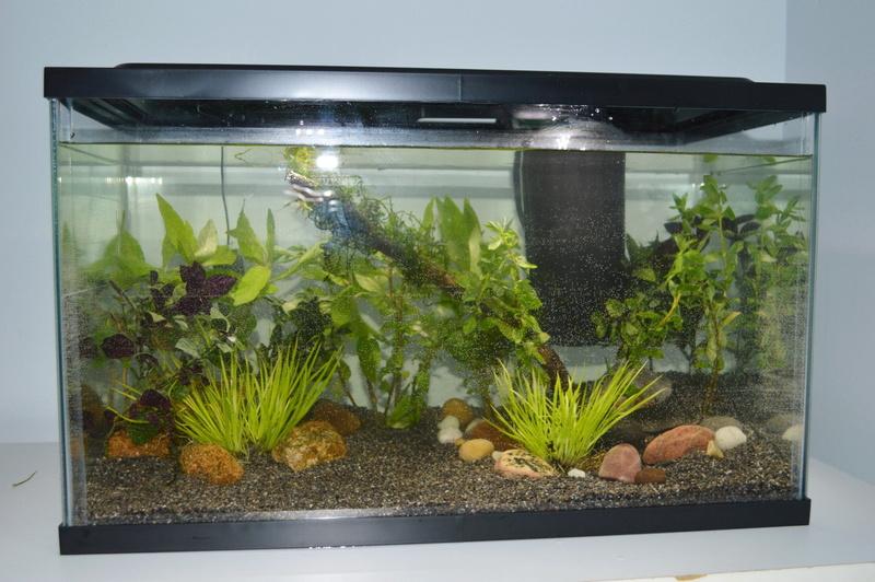 Mes 2 aquariums Aquari10