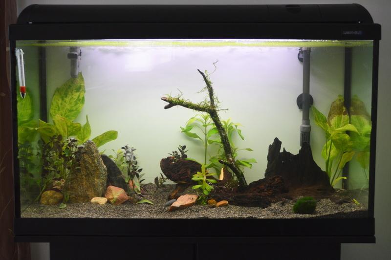 Mes 2 aquariums Dsc_0811