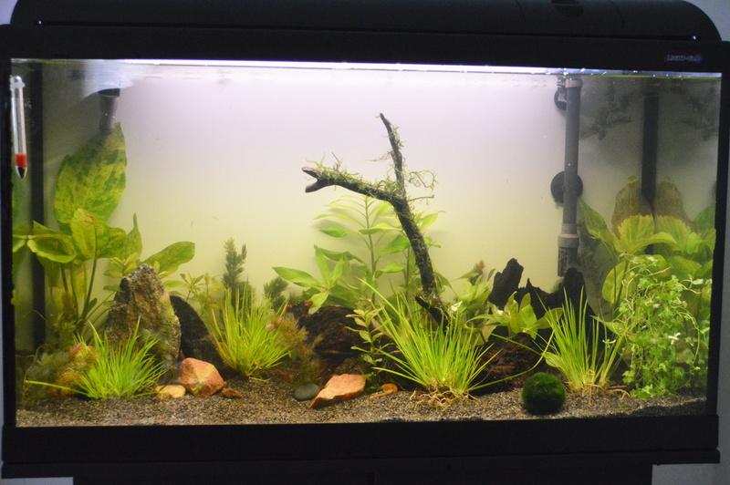 Mes 2 aquariums Dsc_0812