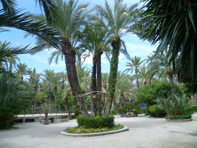 (Espagne) Parc municipal d'Elche - Province d'Alicante 1-p10105