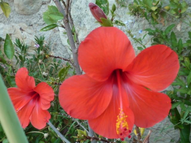 ces quelques fleurs de nos jardins - Page 4 1-p10812