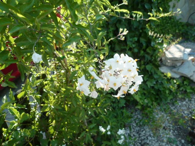 c'est chouette l'été au jardin ! 1-p10838