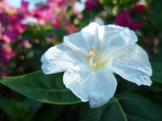 c'est chouette l'été au jardin ! 1-p10839
