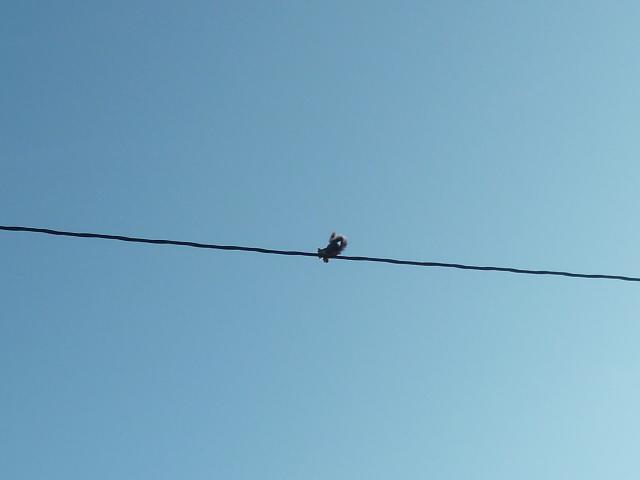 écureuil en visite journaliere 1-p10872